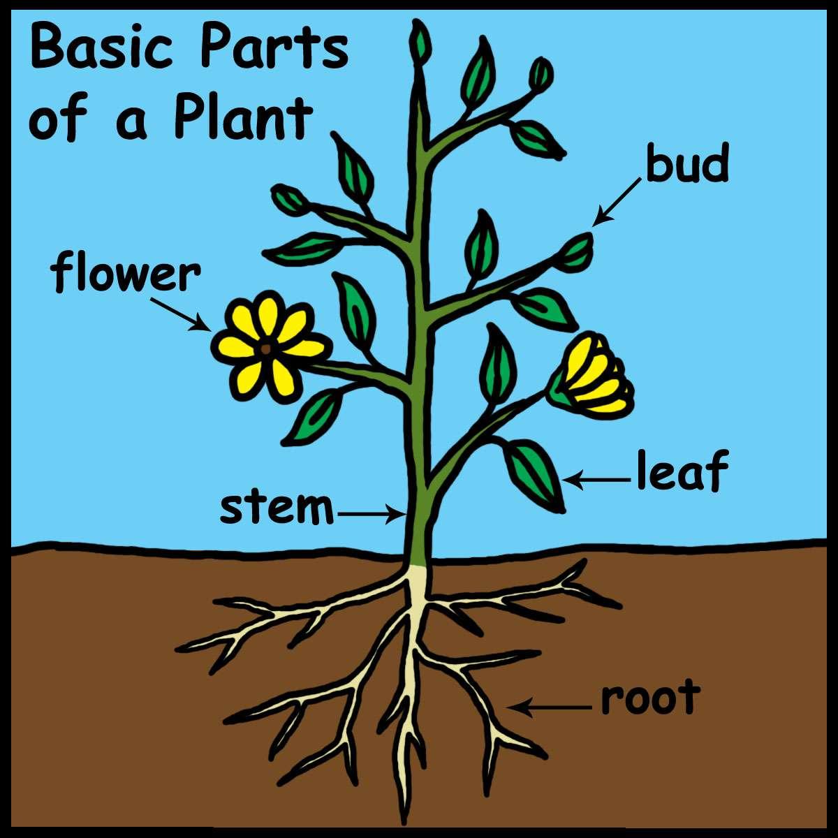 Plants on emaze ccuart Choice Image